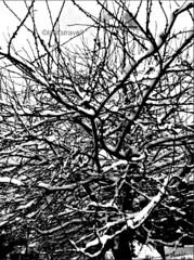 5 (laet'stravel) Tags: blancetnoir blackandwhite arbre tree branche winter hiver invierno