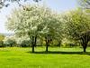 A walk in the park (brooklandsspeedway) Tags: creamerypark lehighvalley lowermacungie alburtis