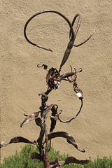 """Spiraling"" by Ira Wiesenfeld in the Arizona Blacksmiths Exhibit at Tucson Botanical Gardens (Distraction Limited) Tags: tucsonbotanicalgardens tucsonbotanical botanicalgardens gardens tucson arizona tbg20180504 spiraling irawiesenfeld arizonaartistblacksmithassociation botanicalblacksmithsexhibitions blacksmiths smiths arizonablacksmithsexhibit sculpture"