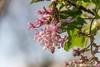 11a (Marjon van der Vegt) Tags: nature denhaag meerkoet eitjes voorjaar bloemenpracht varen water mensen fietsen apotheek empire lisdodde bloemenwinkel genieten