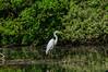 Heron (Fischreiher) (Steffi.K.) Tags: enz vögel schwan frühling feder hund spinne park bird swan spring spider dog feather badenwürttemberg
