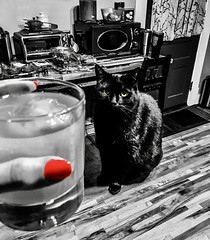 """""""I do not know how to teach philosophy without becoming a disturber of the peace."""" ―Baruch Spinoza 🍹 🐈 (anokarina) Tags: colorsplash 🐈 🍹 appleiphonese highlands louisville kentucky ky cajunshrimp nailpolish blackcat cat kitty kitten pet animal kitchen counter drink cocktail glass alcohol mixed"""