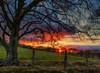 Where I wanna be... (xDigital-Dreamsx) Tags: sunset sundown dusk nature countryside rural fence tree silhouettes colours sunlight landscape springtime sunshine shadow coth5