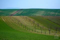 056_Moravian_Tuscany (Overtherainbow changes to KV Photography) Tags: katerinavodrazkova kvphotography landscape moravsketoskansko morava krajina moraviantuscany jiznimorava southmoravia moraviantoscana šardice
