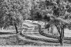 Road (ZeGaby) Tags: blackandwhite champagne marne naturephotography pentaxk1 sigma100300mmf4 streetphotography avenayvaldor grandest france fr