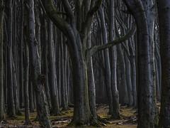 Wood (katrin glaesmann) Tags: gespensterwald nienhagen mecklenburgvorpommern ostsee forest wood linkssindbäumerechtssindbäumeunddazwischenzwischenräume wald