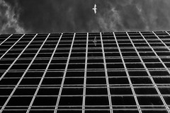 The Seagull (Leipzig_trifft_Wien) Tags: architecture black white lines reflection contrast geometry urban city facade
