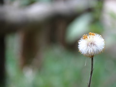 IMG_9419 (germancute) Tags: outdoor wald wildflower wiese walk wolken nature landscape landschaft thuringia thüringen germany germancute blume flower