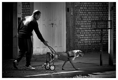 067 of 365 - Living (Weils Piuk) Tags: photoblog365 man dog disabled street city white black bw urban living no matter what paralytic accident survive