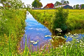 Frysian landscape near Wijckel ...* (8860)