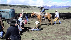 Little Jenny Ranch_branding (nevadoyerupaja) Tags: usa burger cowgirl cattle party brandingiron meat cow roping spring livestock video cowboy branding castrate ranch lifestyle movie wyoming