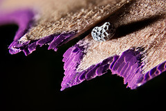 leftovers... (Altazur) Tags: leftover pencil sharpeningpencils purple colouredpencil 7dwf closeup lowkey sidelit macro abstract abstractmacro