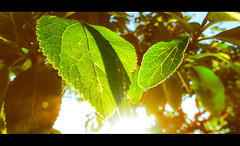 Spring Days (M4x G4x) Tags: feuille leaf soleil soir rayon arbre printemps ambiance ambient spring