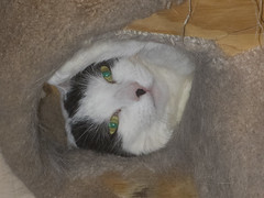 Filling the hole -[ Happy Caturday ]- (Carbon Arc) Tags: happycaturday archive cat feline kitty furball fuzzball