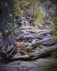 Big South Fork (StantonTubb) Tags: fallcreekfalls landscapes nature outdoors