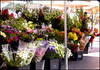 Flower market in Nice,  France. (Country Girl 76) Tags: flower market outdoors nice france blooms sunshine colours variety in explore galleries