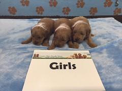 Dakota Girls pic 4 4-22