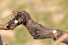 052_Moravian_Tuscany (Overtherainbow changes to KV Photography) Tags: katerinavodrazkova kvphotography landscape moravsketoskansko morava krajina moraviantuscany jiznimorava southmoravia moraviantoscana šardice