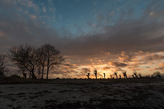 20180405-IMG_9362 (dr_knox) Tags: ereignis objekt ort pflanzen zweck bäume fa ostsee silhouette sonnenuntergang strand trees wolken