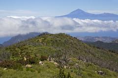El Teide gigante. Dos islas y sus dos cimas. Два острова, две вершины. (atardecer2018) Tags: gomera paisaje canarias naturaleza 2017 гомера