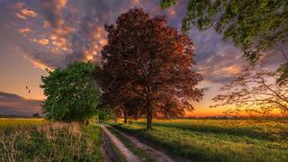 In die Natur ist ein Geheimnis der Liebe eingebaut.   Phil Bosmans (1922 - 2012)