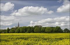 Keysoe Gold (Craig 2112) Tags: rapeseed crop yellow keysoe bedfordshire cloud church spire trees stmarythevirgin