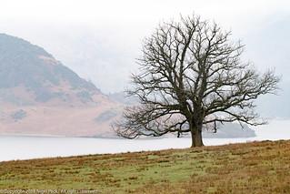 Lone Bare Tree