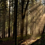 Im Nationalpark Schwarzwald thumbnail