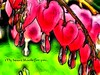 bleeding hearts (Lana Pahl / Country Star Photography) Tags: sliderssunday processing