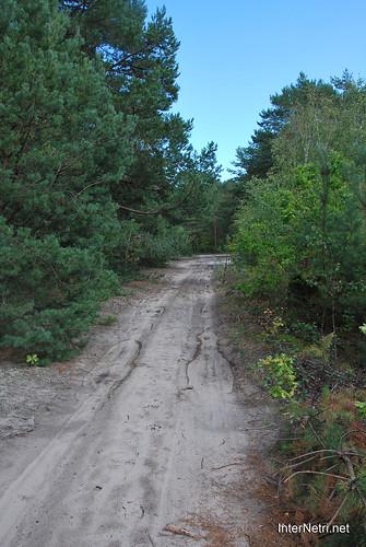 Волинський ліс Лісова дорога InterNetri Ukraine 0785073206