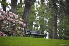 Hendricks park - HBM! (JSB PHOTOGRAPHS) Tags: jsb3902 hendrickspark benchmonday bench flowers rhododendrons rhododendron trees grass eugeneoregon d3 nikon 28300mm