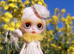 The brightest (pure_embers) Tags: pure embers blythe doll dolls custom reinadesalem embershelga takara neo helga alpaca hair reroot uk girl pureembers colourful photography madame sunrise yellow field
