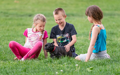 New friend (Lensjoy) Tags: lensjoy kids puppy blackpug dog children playingwithdog fun grass happy young