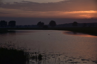 Sonnenaufgang an der Alten Treeneschleife in Süderhöft, Nordfriesland (9)