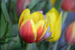 Voorjaar-