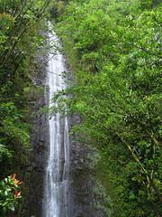 "Manoa Falls (Hawai'i Naturalist) Tags: ""manoafalls"" waterfall hawaii oahu tropical jungle rainforest"