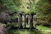 The Old Route (chris.ph) Tags: broken bridge trees forest portrenfrew reflection canon6d ef70200mmf4lisusm