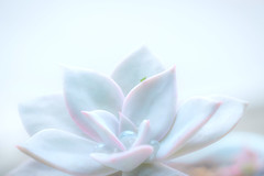 Almost Forgot About You! (Jimweaver) Tags: nature mountain green lake insect grass hopper 螽蟴 蚱蜢 草 台灣 台北 asia 亞洲 微距 昆蟲 tiny flower 花 lotus lily echeveria 植物 plant small lovely cute 微 小 水珠 water drop drip
