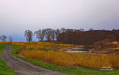 IMG_4085 Backroad (Cyberlens 40D) Tags: nj newjersey usa landscapes scenery foliage colors roads rural farms countryroads platinumheartaward