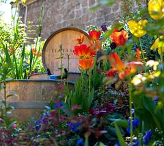 Los Gatos Wine Walk-2 (rachelle.haun) Tags: losgatos winewalk wine sunshine spring winery event