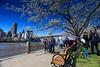 Cherry Blossom Festival (Jemlnlx) Tags: canon eos 5d mark iv 4 5d4 5div ef 1635mm f4 l is usm new york city ny nyc roosevelt island cherry blossom festival