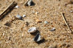 Macro Beach (SeannPatrickPhotography) Tags: outerbanks coast atlantic northcarolina nc obx beach midatlantic ocean sand shells closeup