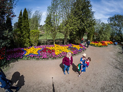 Skagit Valley Tulips-187 (RandomConnections) Tags: roozengaarde skagitcounty skagitvalley washington washingtonstate mountvernon unitedstates us skagitvalleytulipfestival