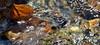 in-between (she, myself and eye) Tags: eechillington nikond7500 viewnxi corelpaintshoppro fergusoncanyon utah hiking water patterns texture leaf rocks