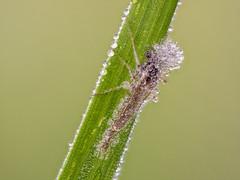 2018-04-28 09-09-30 (C) (turbok) Tags: insekten tiere c kurt krimberger
