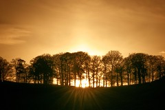 Spinney Sunset (ianderry64) Tags: leicester park bradgate nature landscape trees tree copse spinney woods sunshine light gold rays flare sunset