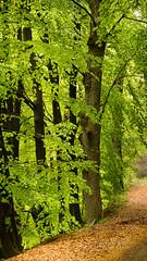 ...una passeggiata nel bosco (Paolo-Do) Tags: verde bosco alberi albero giaveno sentiero makroplanart2100 carlzeiss