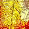 * A moment in the life of A-lad-in-San-Diego ( 4 ) (Wandering Dom) Tags: nature plants wall dwelling outside earth multiverse time life reality dream existence being nothingness palm frond expression impression roam wandering