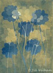 Primulas (Mirrored-Images) Tags: cyanotype me multipleexposure primulas flowers flora alternativephotographicprocess photogram sunprint