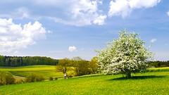 Spring time landscape (PHOTOPHOB) Tags: heckengäu photophob badenwürttemberg aidlingen gechingen deufringen ostelsheim landscape landschaft frühling spring wiesen felder wald